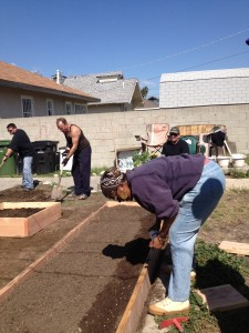 Photo of Budlong Garden - Lynda planting peas